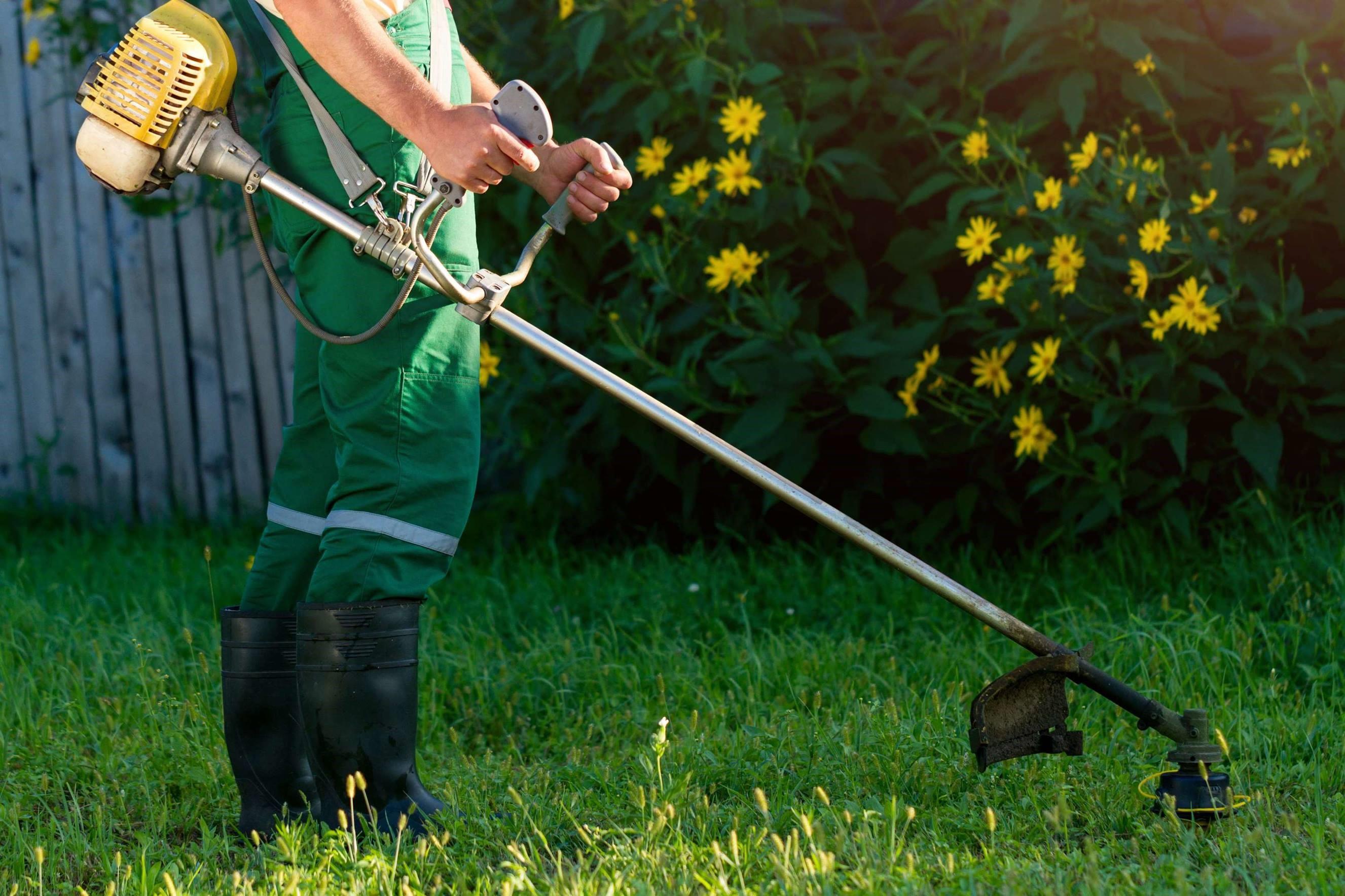 usługi porządkowe legnica, usługi transportowe legnica, utrzymywanie obiektów legnica, wycinka drzew dolnośląskie, wycinka drzew legnica, wynajem kontenerów legnica, wywóz gruzu legnica